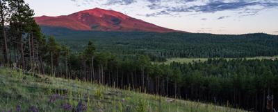 Utah Forest Service sued for cattle grazing permits
