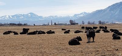 """Demand is """"white hot"""" for Intermountain working ranches"""