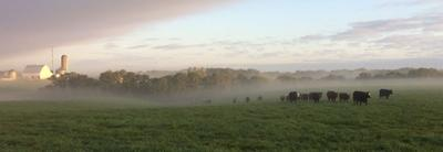 Beef delivers priceless ecosystem services