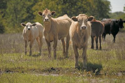 USDA prevails in state beef checkoffs suit
