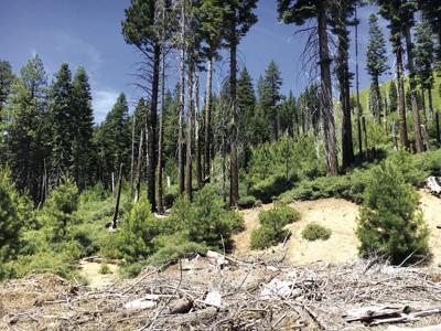 Fostering forest stewardship