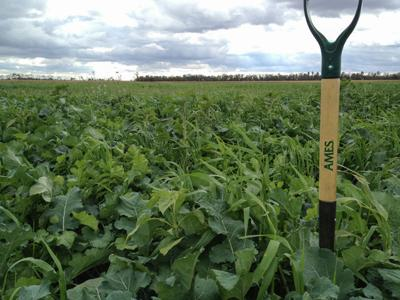 How to manage prevented planting acres in 2019
