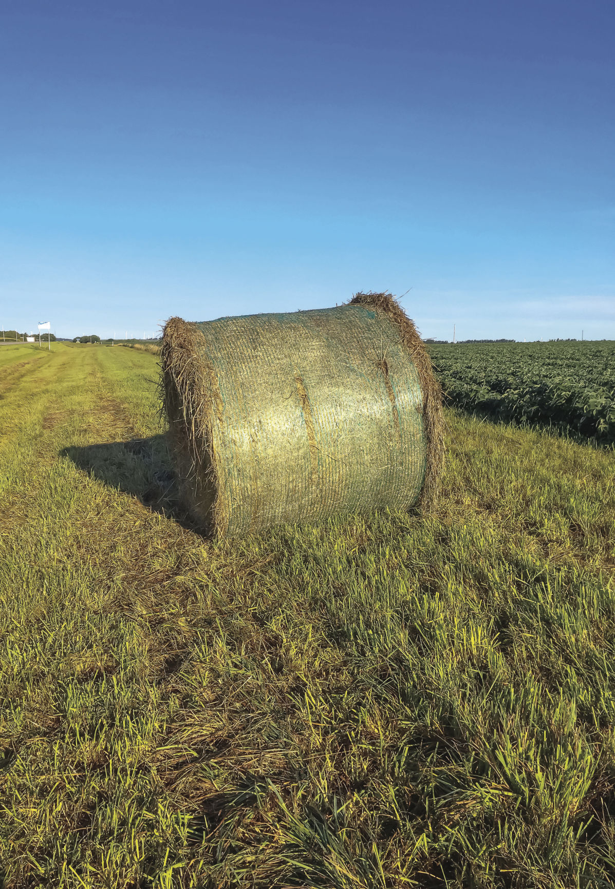 Know the feeding value of ditch hay