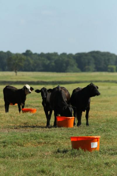 Product News: Tips to reduce calf shipping stress