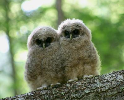 Resource Science: Spotted owls and the timber wars