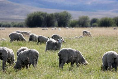 ASI weighs legal options in grazing case