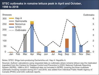E. coli outbreaks in romaine lettuce