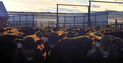 Bill seeks to expand grazing retirement