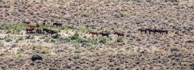 Feral horses degrade the land
