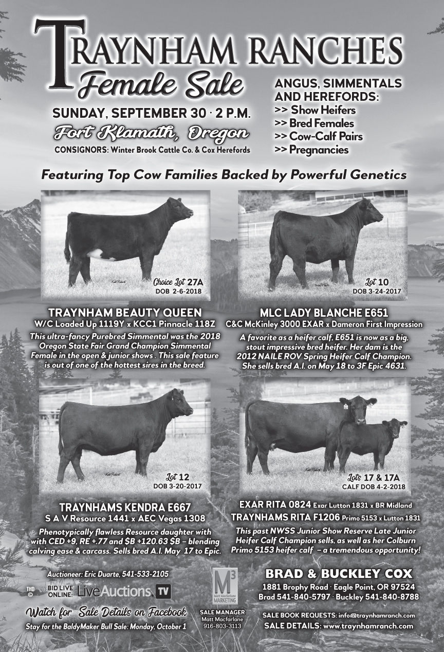 Traynham Ranches Female Sale (Angus, Simmentals & Herefords) | Sale