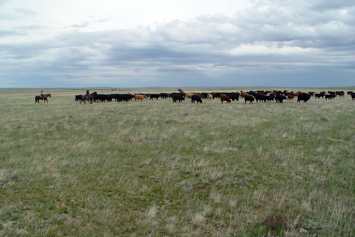 BeefTalk: When dry, focus on heifers and the young cows