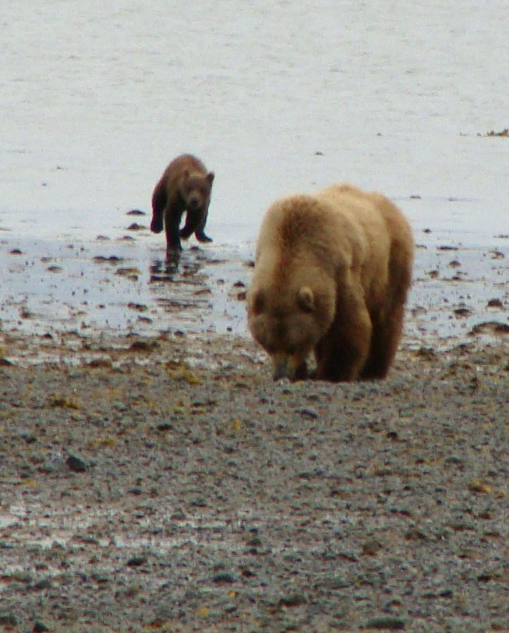 Guest opinion: Grizzly bears are not always good neighbors