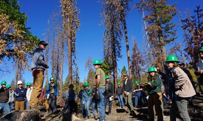 "Acceptance growing for ""pyrosilviculture"""