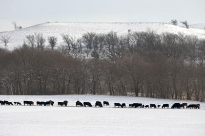 Blizzard dumps snow on Montana ranches