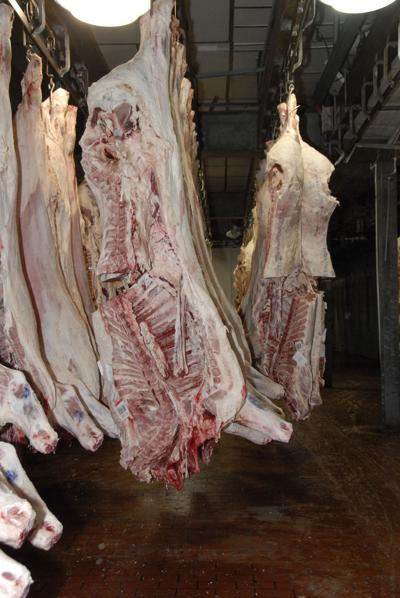 Feedlot production and cattle slaughter