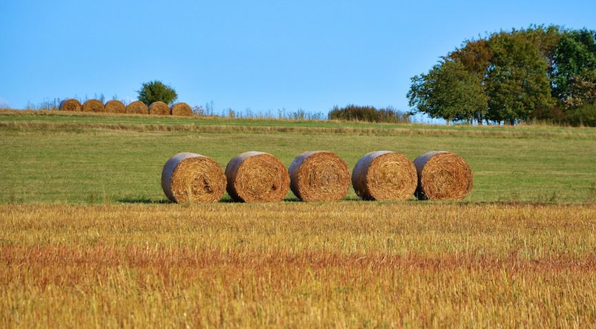 BeefTalk: Rolling out hay is rolling out dollars