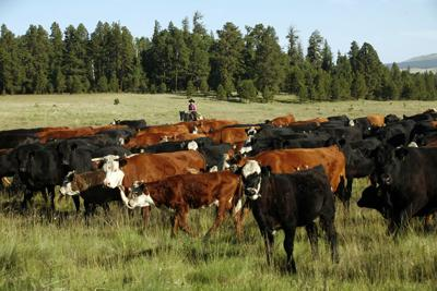 Economist: Taste feeds growing demand for beef