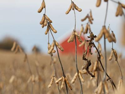 Bill: Make trade-aid open to soybean farmers stuck with crops