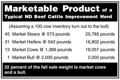 BeefTalk: Market cows and bulls rather than cull