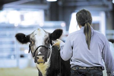 youth livestock