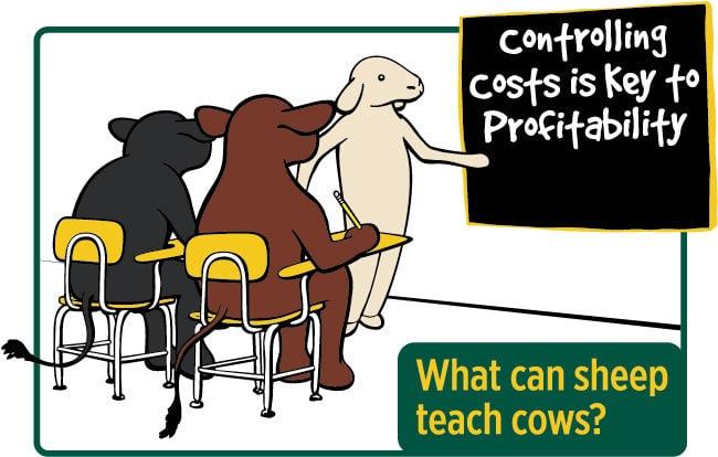 BeefTalk: What can sheep teach cows?