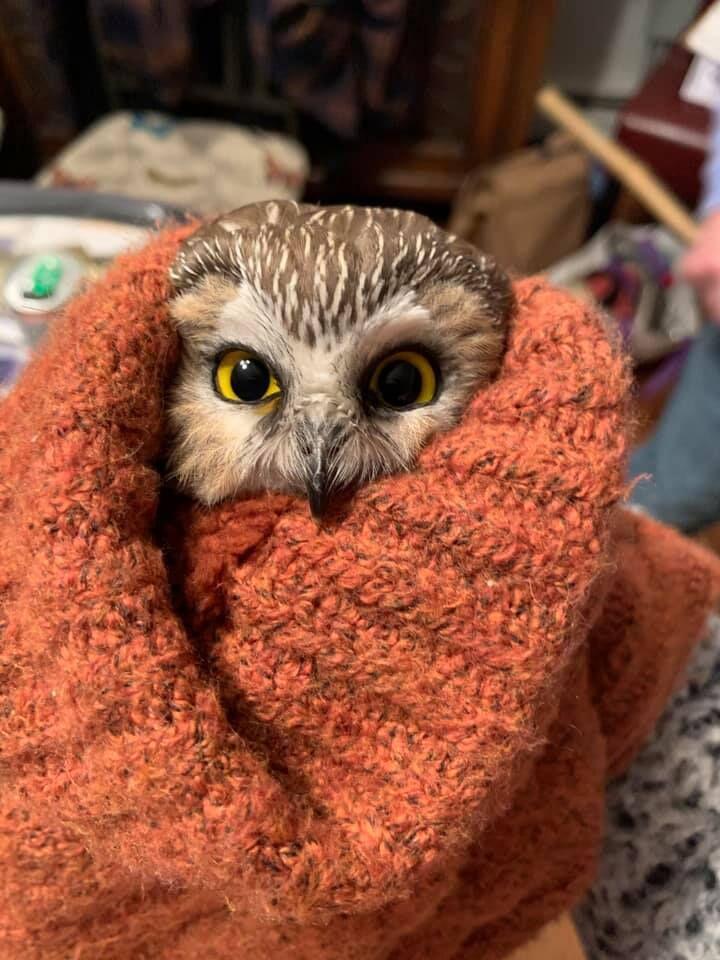 rock owl3.jpg