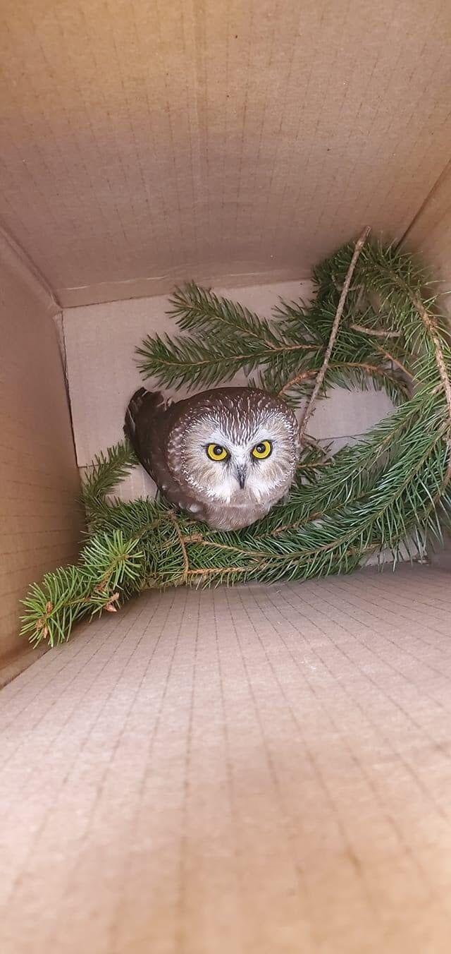rock owl2.jpg