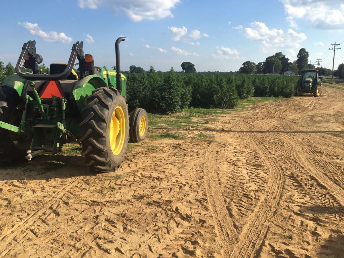 Justin Clark hemp farm2