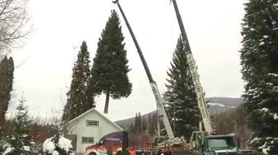 Capitol Christmas Tree.U S Capitol Christmas Tree Cut Down Ready For Journey From