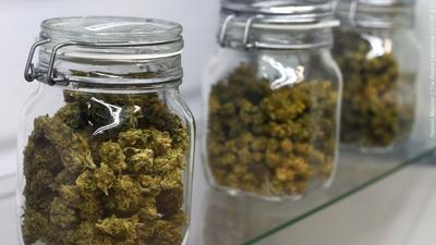 Marijuana cannabis mgn.jpg
