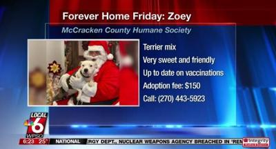 forever home friday zoey.JPG