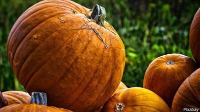pumpkins mgn