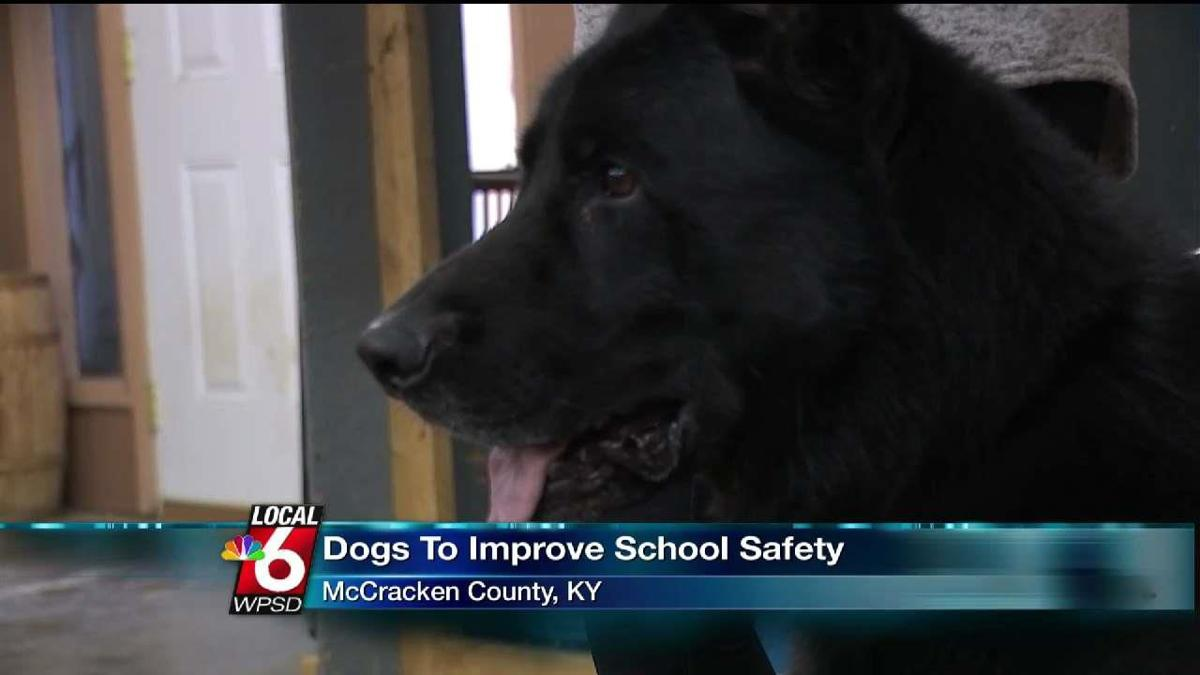 Kennel Training Firearm Sniffing Dogs For School Safety