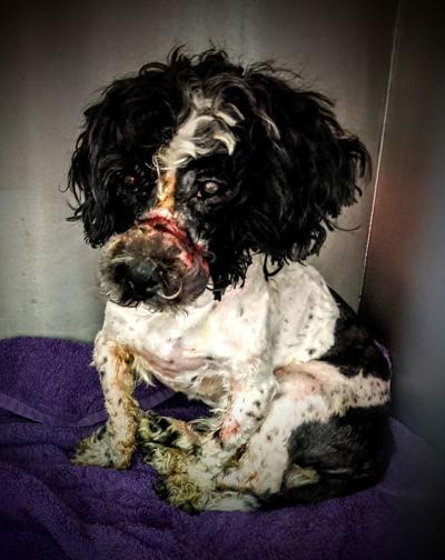 Murphysboro abused dog