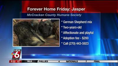 Forever-Home-Friday_-Jasper-image