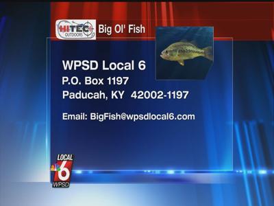 Big Fish HITEC