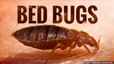 Bed bugs mgn