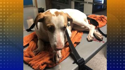 Knoxville Puppy Recovering