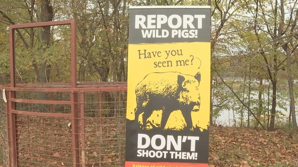 hog extermination at LBL1