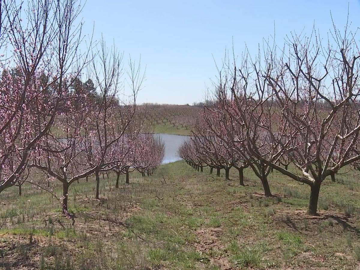 Below freezing temperatures could impact plants and fruit