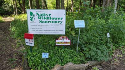 Wildflower Sanctuary
