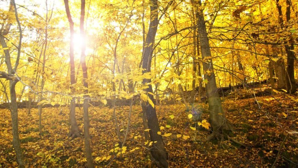 Seward Bluff - Fall