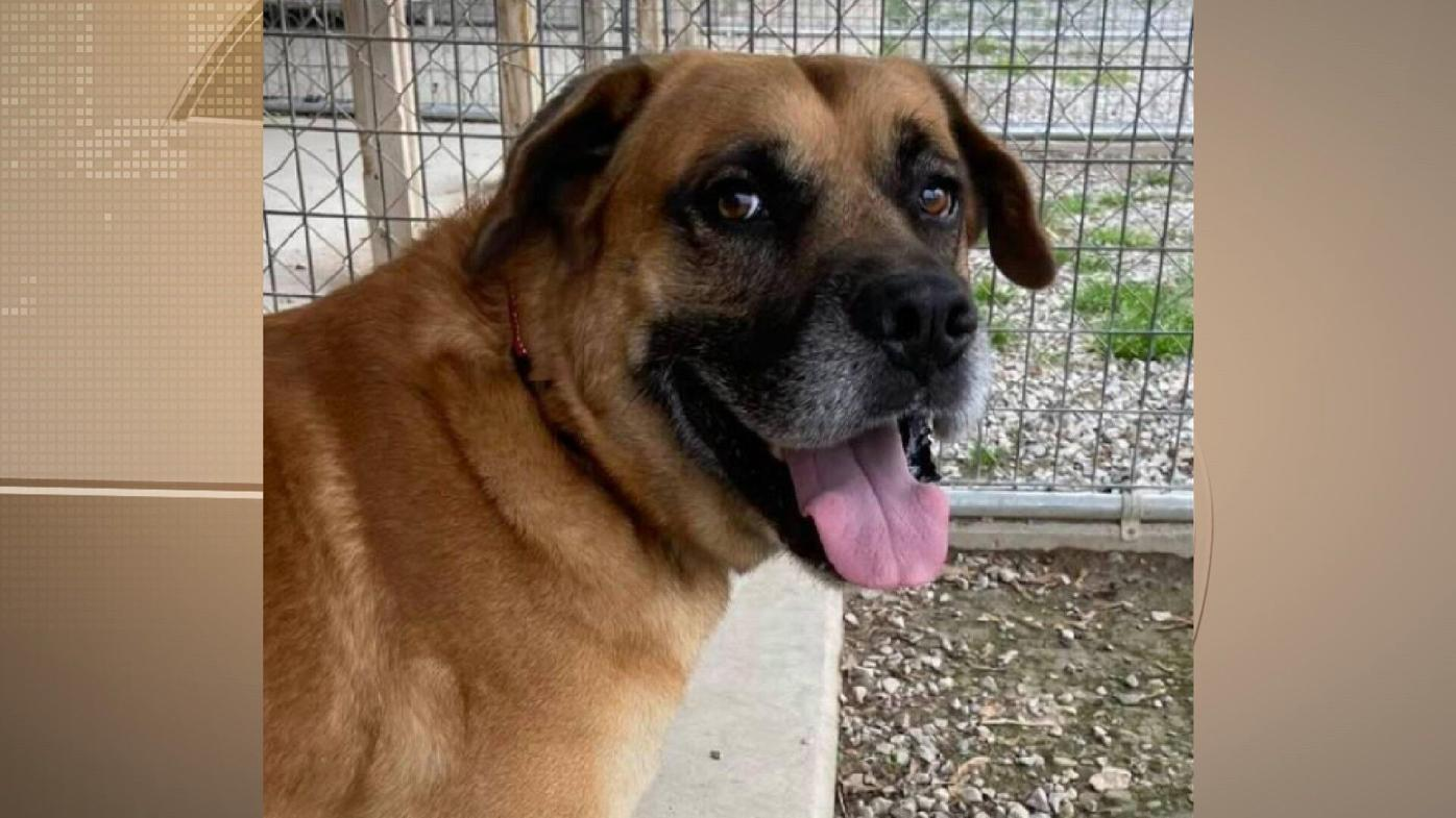 Max -- Perry County Humane Society: (618) 542-DOGS(3647)