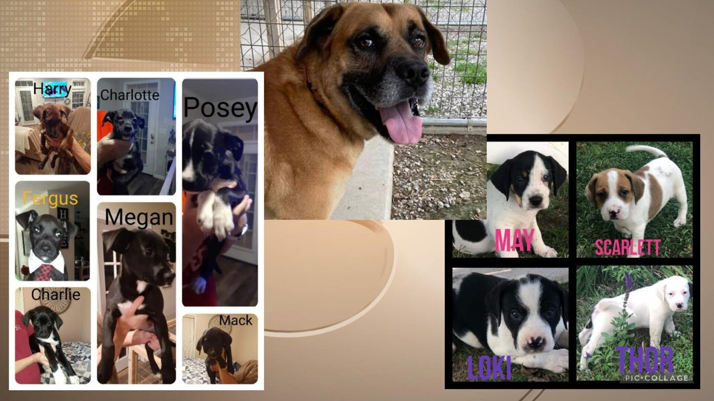 Pets of the Week: October 14, 2011