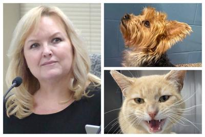Collage:  Amy Cesich and Animals