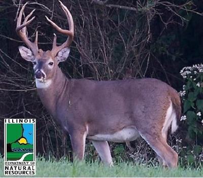 IDNR Deer