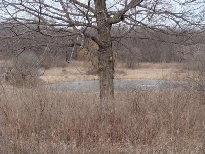 Pond View from the Pickerill-Pigott Forest Preserve