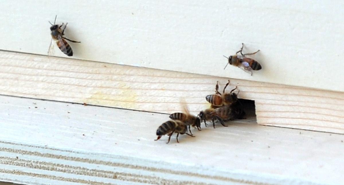 chas beekeep3