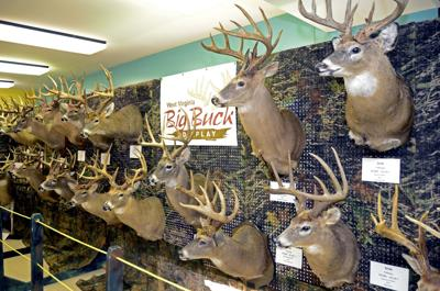 John McCoy: Are record-breaking bucks a thing of the past in WV?