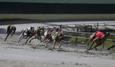 Greyhound Lawsuit